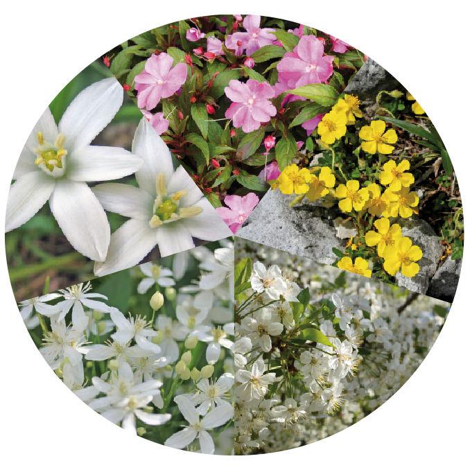 flores-ayuda
